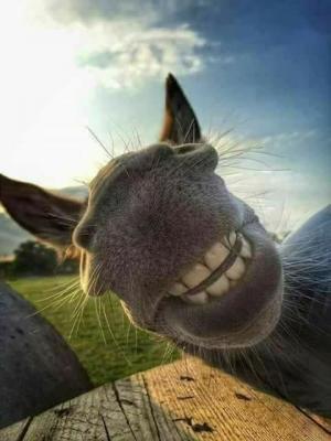 Un sumeru surridente è di bon umore.
