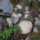 Source au pont d' Altiani.