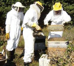 apiculteurs.jpg