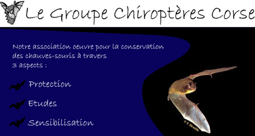 chiroptere-corse-1.png