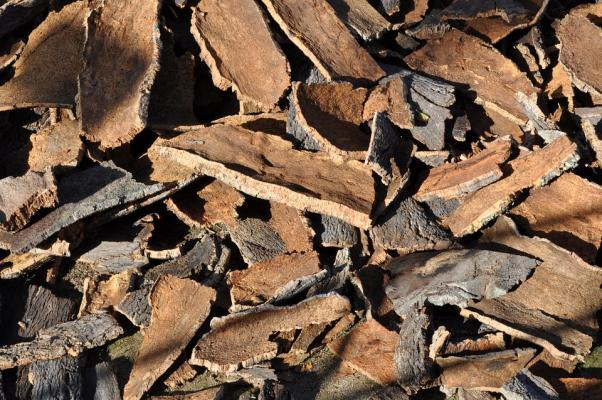 Cork oak 505263 960 720