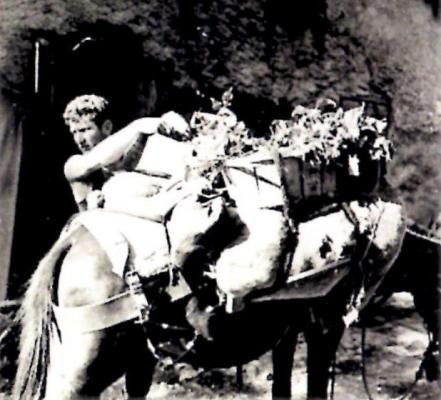 Transport raisin